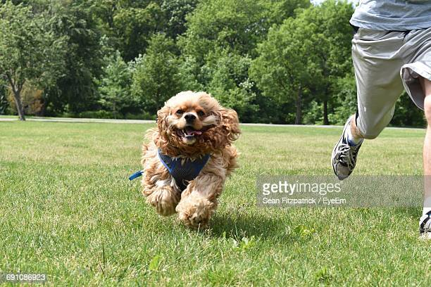 Low Section Of Man With Dog Walking On Grass