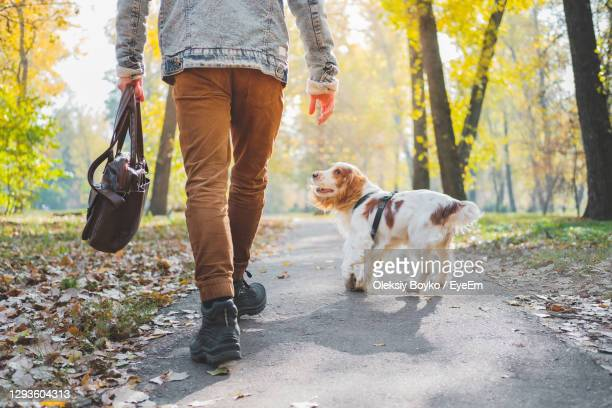 low section of man with dog walking on road in park - human foot stock pictures, royalty-free photos & images