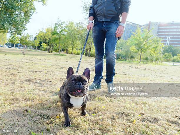 Low Section Of Man With French Bulldog In Park