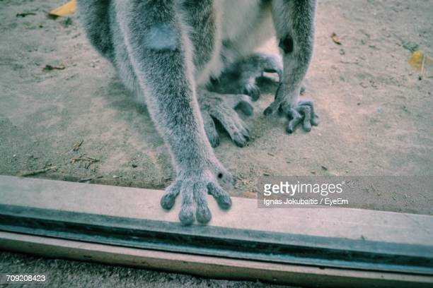 low section of monkey sitting on sand at limassol zoo - monkey paw stock photos and pictures