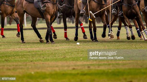 low section of people and horse at polo sport - polo stock pictures, royalty-free photos & images