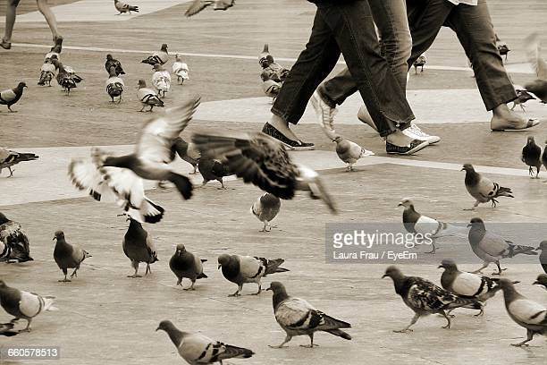 low section of people walking by pigeon on street - frau photos et images de collection