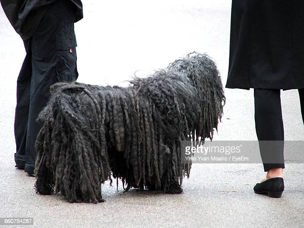 low section of people with puli dog at beach - yvan moallic stock-fotos und bilder
