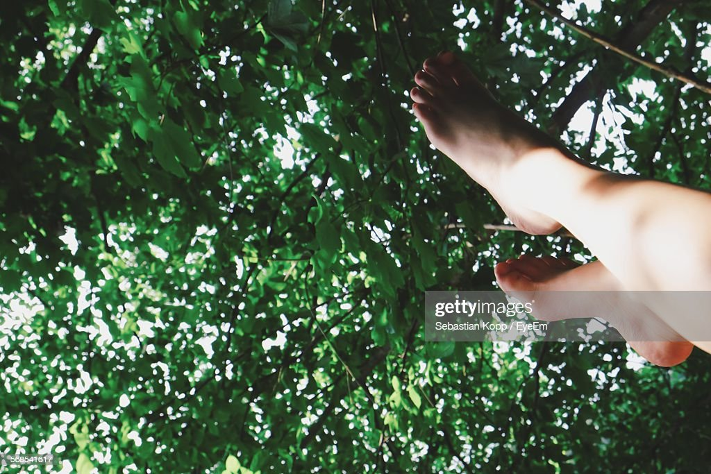 Low Section Of Person Against Trees : Stock Photo