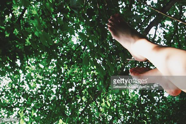 low section of person against trees - köpenick stock pictures, royalty-free photos & images