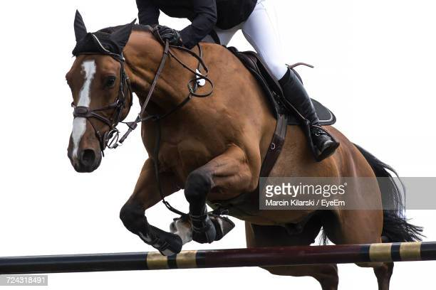 Low Section Of Person Jumping With Horse In Competition