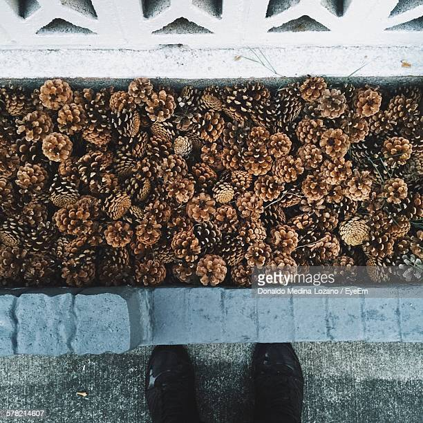 Low Section Of Person On Footpath In Front Of Pine Cones