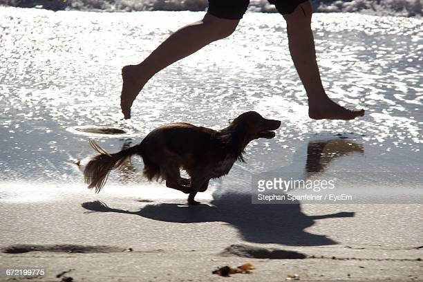 Low Section Of Person Running With Dachshund Dog On Shore
