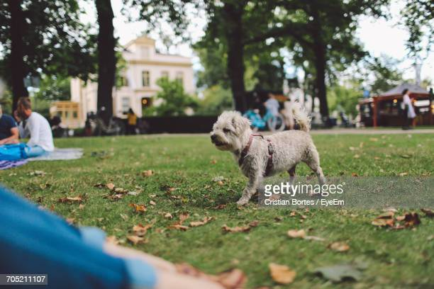 Low Section Of Person Sitting By Dog At Park