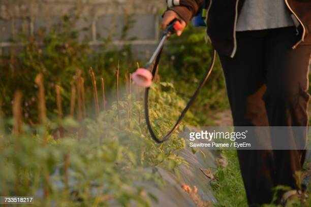 Low Section Of Person Spraying Pesticides On Plants