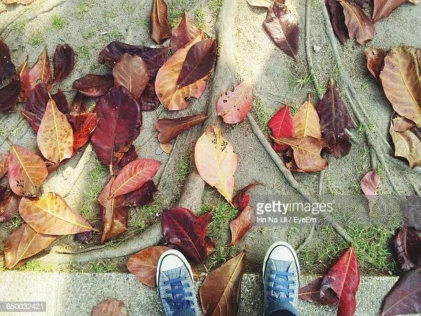 Low Section Of Person Standing By Fallen Autumn Leaves On Field