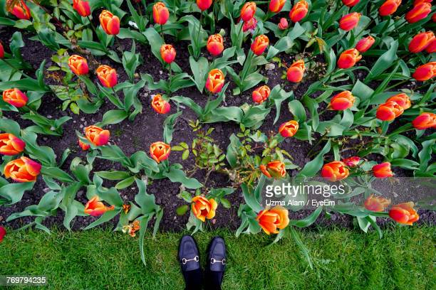 Low Section Of Person Standing By Flowers Growing On Field