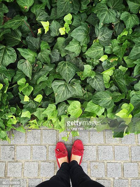 Low Section Of Person Standing By Plants