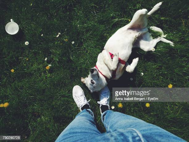 Low Section Of Person Standing By Playful Dog Lying On Grassy Field