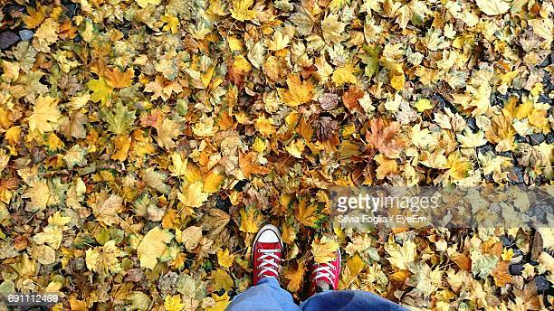 Low Section Of Person Standing Field Covered With Dry Autumn Leaves