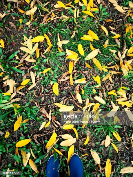Low Section Of Person Standing On Fallen Autumn Leaves At Park