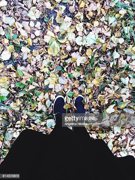 low section of person standing on fallen leaves on field during autumn - nikitina stock pictures, royalty-free photos & images