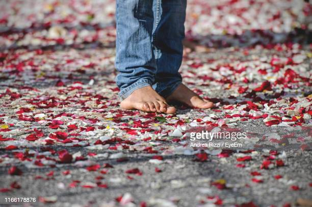 low section of person standing on flower petals - andrea rizzi fotografías e imágenes de stock