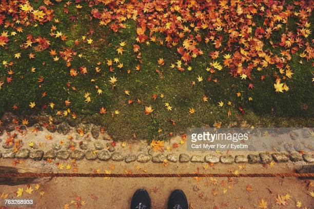 Low Section Of Person Standing With Autumn Leaves