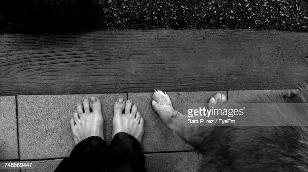 Low Section Of Person Standing With Dog At Porch