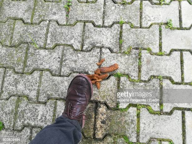 low section of person stepping on animal dung over cobblestone street - excremento fotografías e imágenes de stock