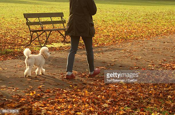 Low Section Of Person Walking By Poodle Dog At Park