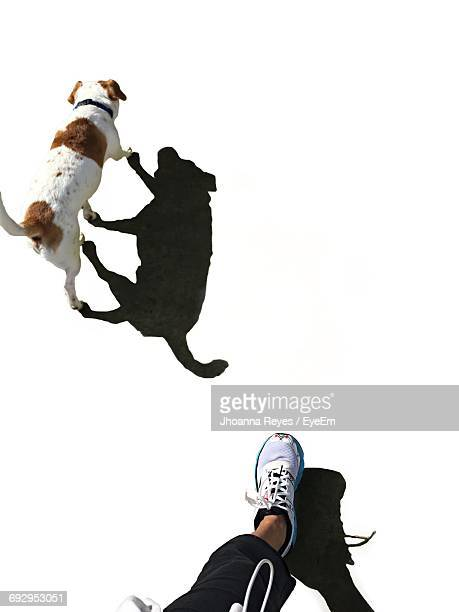 Low Section Of Person Walking With Dog