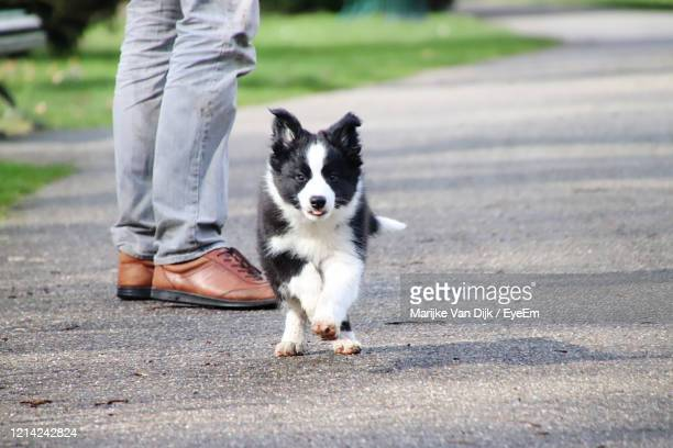 low section of person with dog - van dijk stock pictures, royalty-free photos & images
