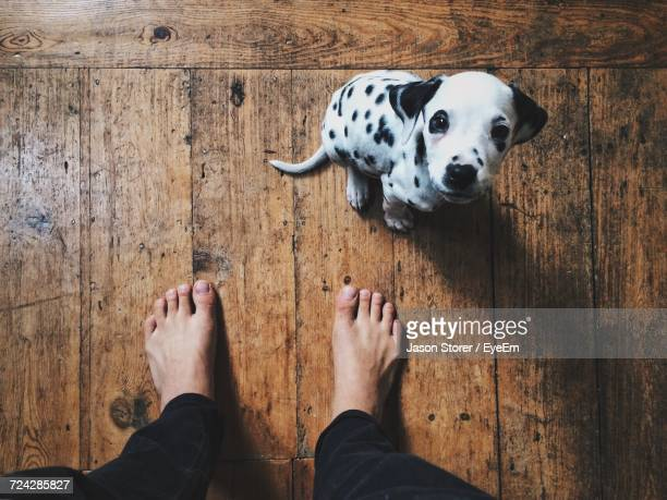 low section of person with dog standing on floor - dalmata imagens e fotografias de stock