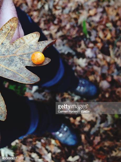 Low Section Of Person With Dry Leaf With Mushroom On It