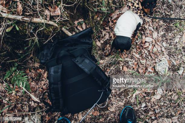 low section of pet owner with dog and camera bag on field in forest - 人の脚 ストックフォトと画像
