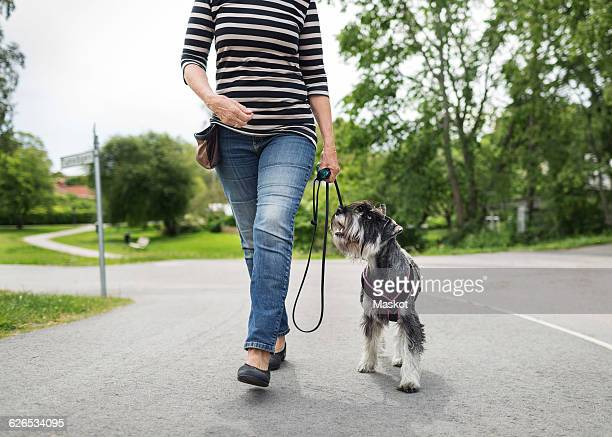 low section of senior woman walking with dog on street - low section stock pictures, royalty-free photos & images