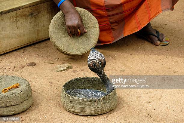 Low Section Of Snake Charmer With Cobra On Field