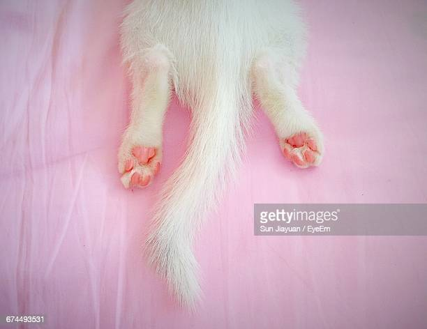 Low Section Of White Cat On Pink Sheet