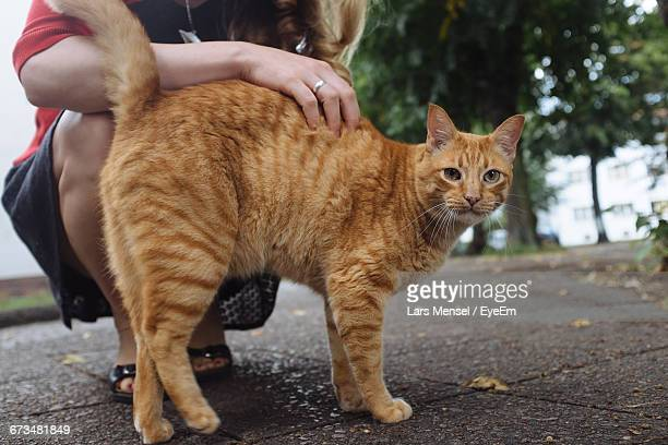 Low Section Of Woman Crouching By Ginger Cat On Footpath