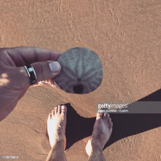 Low Section Of Woman Holding Sand Dollar At Beach