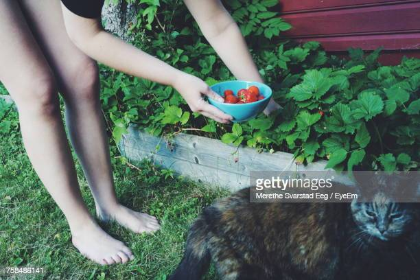 Low Section Of Woman Picking Strawberries While Standing By Cat At Back Yard