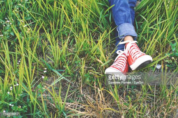 low section of woman sitting on grass - legs crossed at ankle stock pictures, royalty-free photos & images