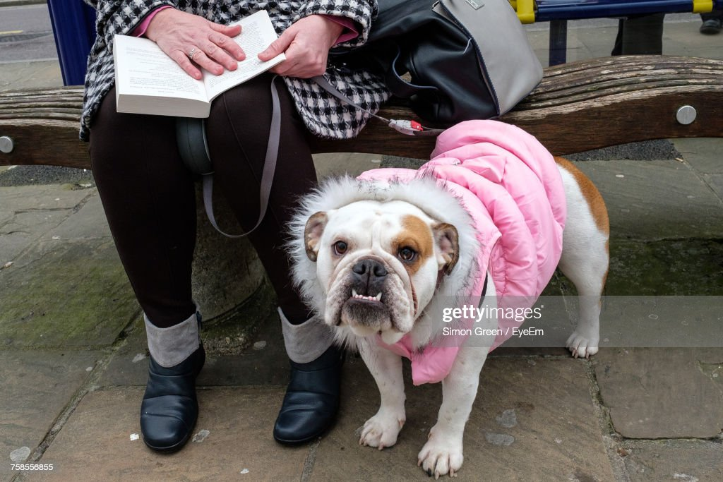 Low Section Of Woman Sitting With Dog : Foto de stock