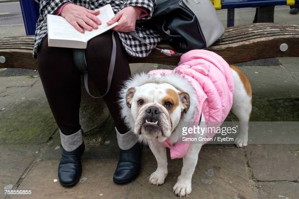 low section of woman sitting with dog - pink coat stock pictures, royalty-free photos & images