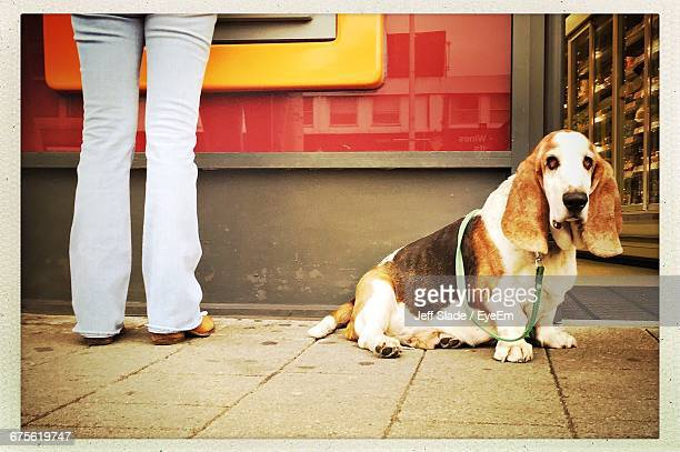 Low Section Of Woman Standing By Basset Hound On Sidewalk