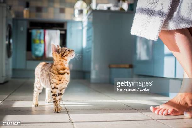 low section of woman standing by cat on tiled floor at home - human leg stock photos and pictures