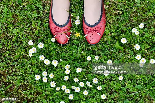 Low Section Of Woman Standing By Daisy Flowers