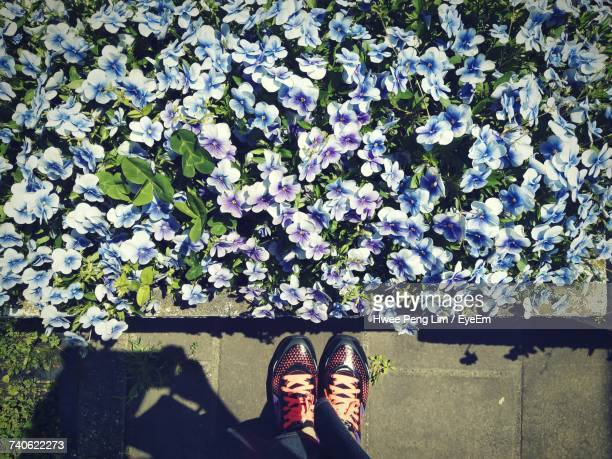 Low Section Of Woman Standing By Flowerbed