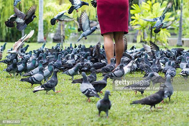 low section of woman standing by pigeons on grassy field - frau gespreizte beine stock-fotos und bilder