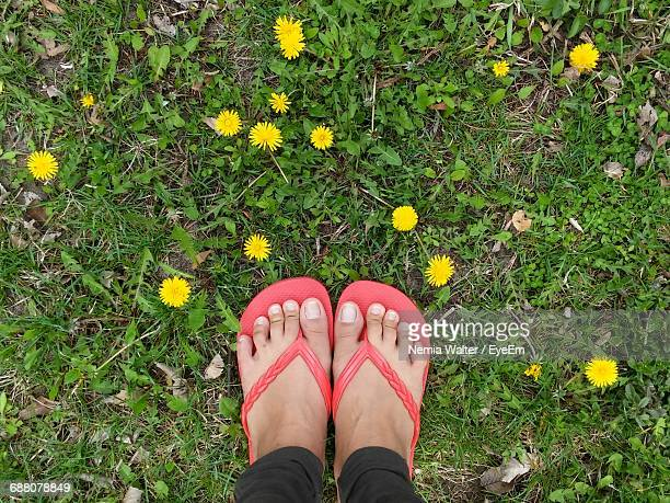 Low Section Of Woman Standing By Yellow Flowers On Field