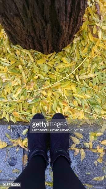 Low Section Of Woman Standing By Yellow Leaves During Autumn