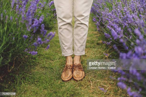 low section of woman standing in lavender field - bortes foto e immagini stock
