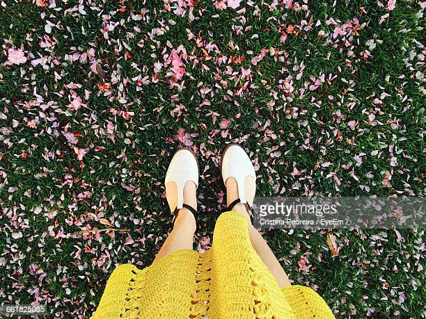 low section of woman standing on fallen flower petals on grass in park - yellow shoe stock pictures, royalty-free photos & images