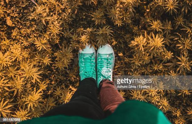 low section of woman standing on field - kashmir valley stock photos and pictures